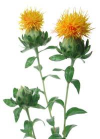 http://www.phytoreponse.fr/images/lexique/carthame_lexique_plantes.jpg